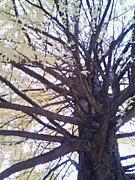 この木なんの木気になる木。
