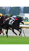 レッドブルピサ(競走馬)