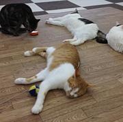 関東♪猫カフェで遊ぶニャー会