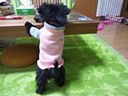 イヌの洋服作り隊