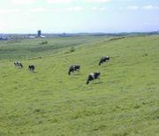 乳牛屋さん