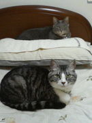 猫猫パラダイス