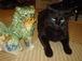 黒い猫持っています!!にゃぁぁ