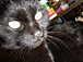 黒猫の排泄障害