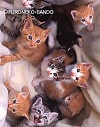 鶴岡動物命を守る会 Cat's愛