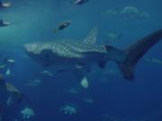 ★World's Aquarium Report!