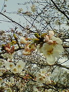 桜台高校1995・3卒業
