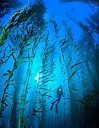 ダイビングクラブ 「海の森」