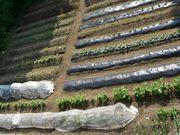 鎌倉山野菜・ DOWN TO EARTH