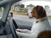 運転するのが好き