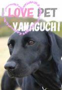 I LOVE PET @YAHAGUCHI