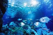 日本の水族館 世界の水族館