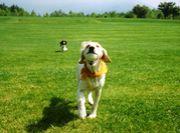 『犬付き&子付き』の楽しい生活
