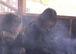 タバコの煙が駄目なんです。