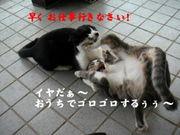 面白ネタ画像〜ヽ(  ´∀`)ノ