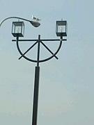 デザイン街灯