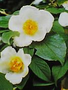 ・沙羅双樹の花♪