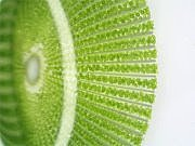 微細藻類・バイオ燃料