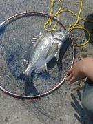 紀州チヌ釣り集まろう!