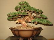 盆栽、小盆栽、皐月の豆知識