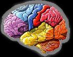 lux-brain