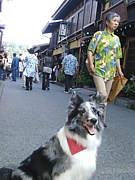 ワンコ大好き神奈川