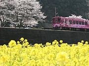 広島県大竹市 フォトカフェ