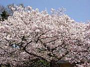 小樽市桜町中学校