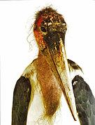 アフリカハゲコウ