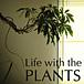 植物のある生活