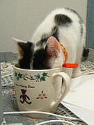 oooやっぱり猫が好き♡