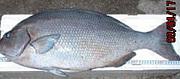 沖縄全域、他各地方 磯釣り