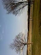 水元公園パークストリングス