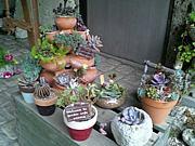 多肉植物のお庭