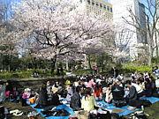 3.28新宿中央公園でお花見♪