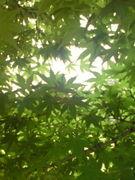 木陰でお昼寝。