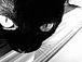 黒猫ボンベイ