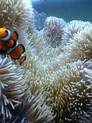 海砂利水魚