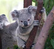 オーストラリア・ワーホリ2011