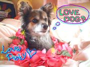 ����LOVE DOG!