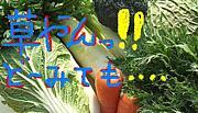 野菜を(/ロ゜)/ポイっ