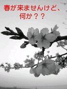 春が来ませんけど何か?