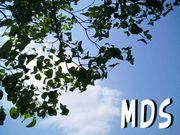 MDS 骨髄異形成症候群
