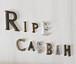 Ripe Casbah  <ライプ カスバ>