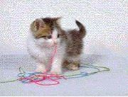 FPET猫屋敷移動先