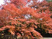 京都嵐山きもの倶楽部