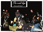 the mad dogs
