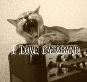 猫好きバンドマン