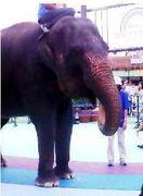 アジア象love☆
