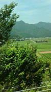 水田の風景が好き